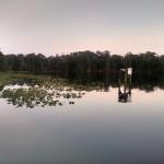 JAX Clarks Fish Camp